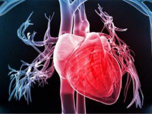 Tìm hiểu kiến thức về bổ sung collagen cho sinh lý tim mạch